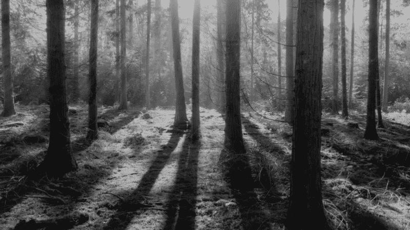 TOEICパート1の例題を紹介するための写真。森の中で気が地面に影を落としている様子が映し出されている。この写真の説明として正しいものを次の4つの中から選ぶ。