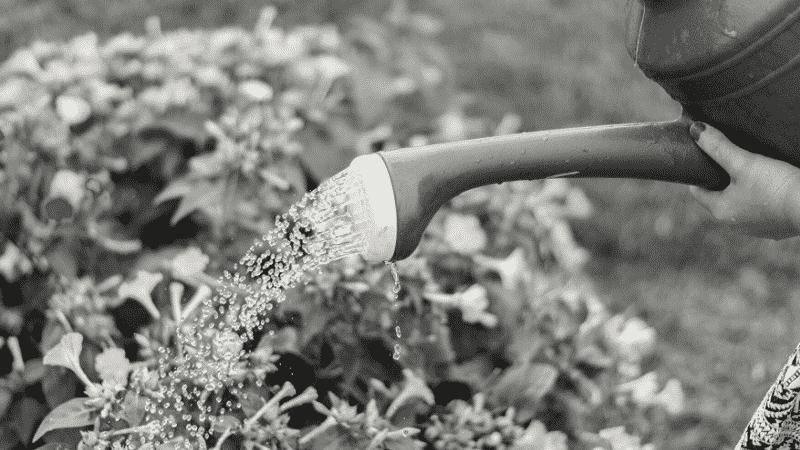TOEICパート1の例題を紹介するための写真。ジョウロを手に、植物に水を上げている様子が映し出されている。この写真の説明として正しいものを次の4つの中から選ぶ。